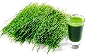 nikken jade greenzymes organic barley grass supplement