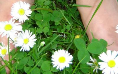 Grounding for Allergies